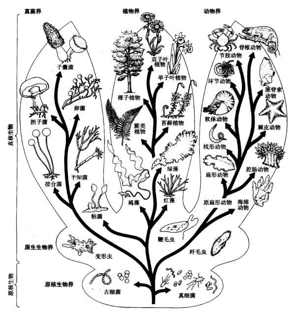 進化系統樹